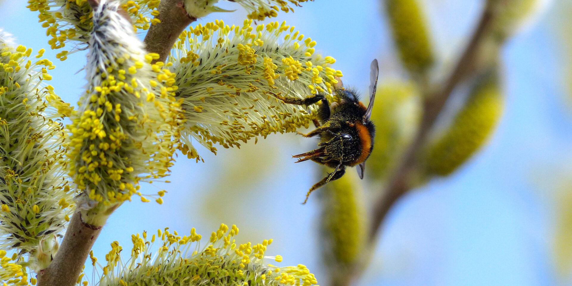 Biene, Bienensterben